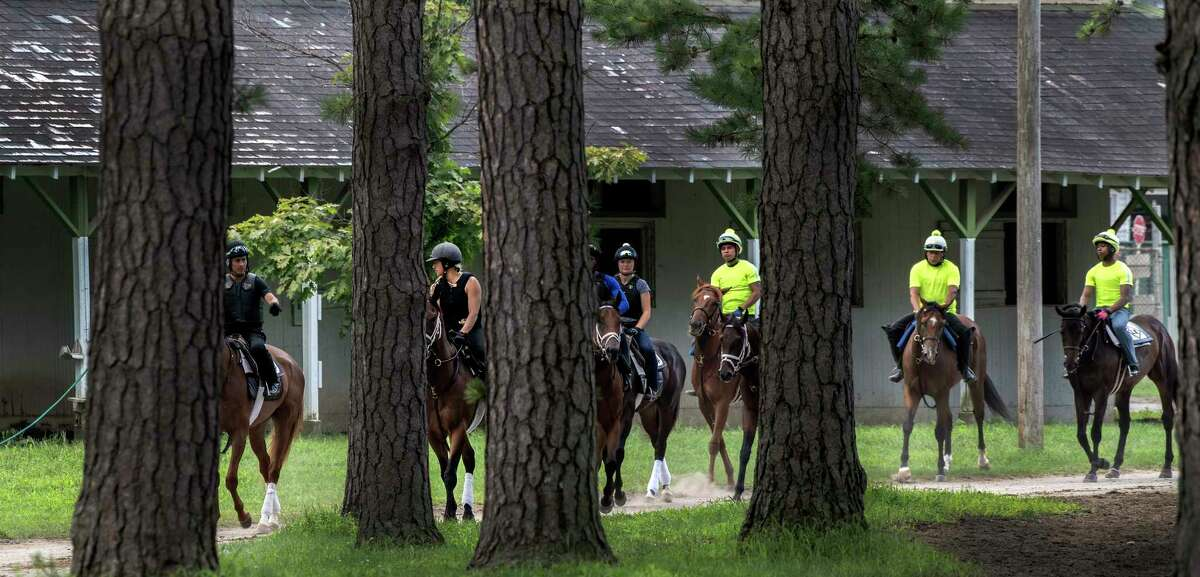 Horses walk through the trees in the Clare Court barn area on the way to the main track for some morning exercise at the Saratoga Race Course Wednesday Aug. 8, 2018 in Saratoga Springs, N.Y.(Skip Dickstein