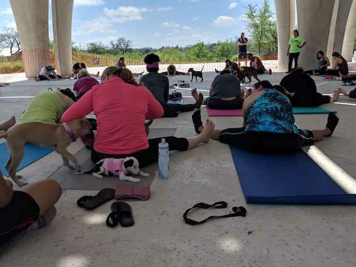 Earlier this year, San Antonio Pets Alive held a puppy yoga event to encourage adoptions.
