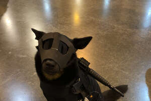 Merly the Cosplay Dog