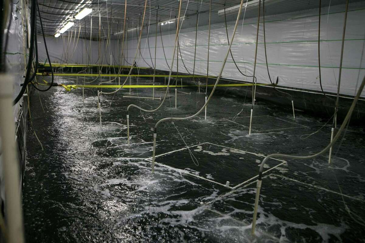 A salt water tank used to grow shrimp at NaturalShrimp Inc.'s Lacoste facility July 18, 2018. The Dallas-based company has created technology that will allow for multiple inland shrimp farms and allow the company to become a major supplier of sustainable shrimp as the global population grows and oceans continue to be over-fished.