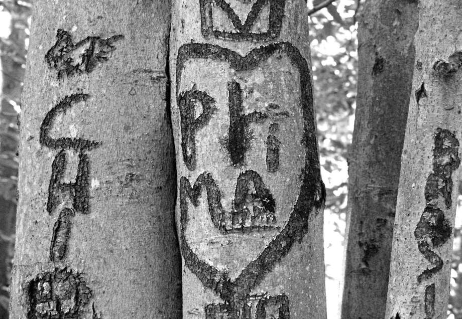 A declaration of love among the trees. Photo: Genevieve Reilly / Hearst Connecticut Media / Fairfield Citizen