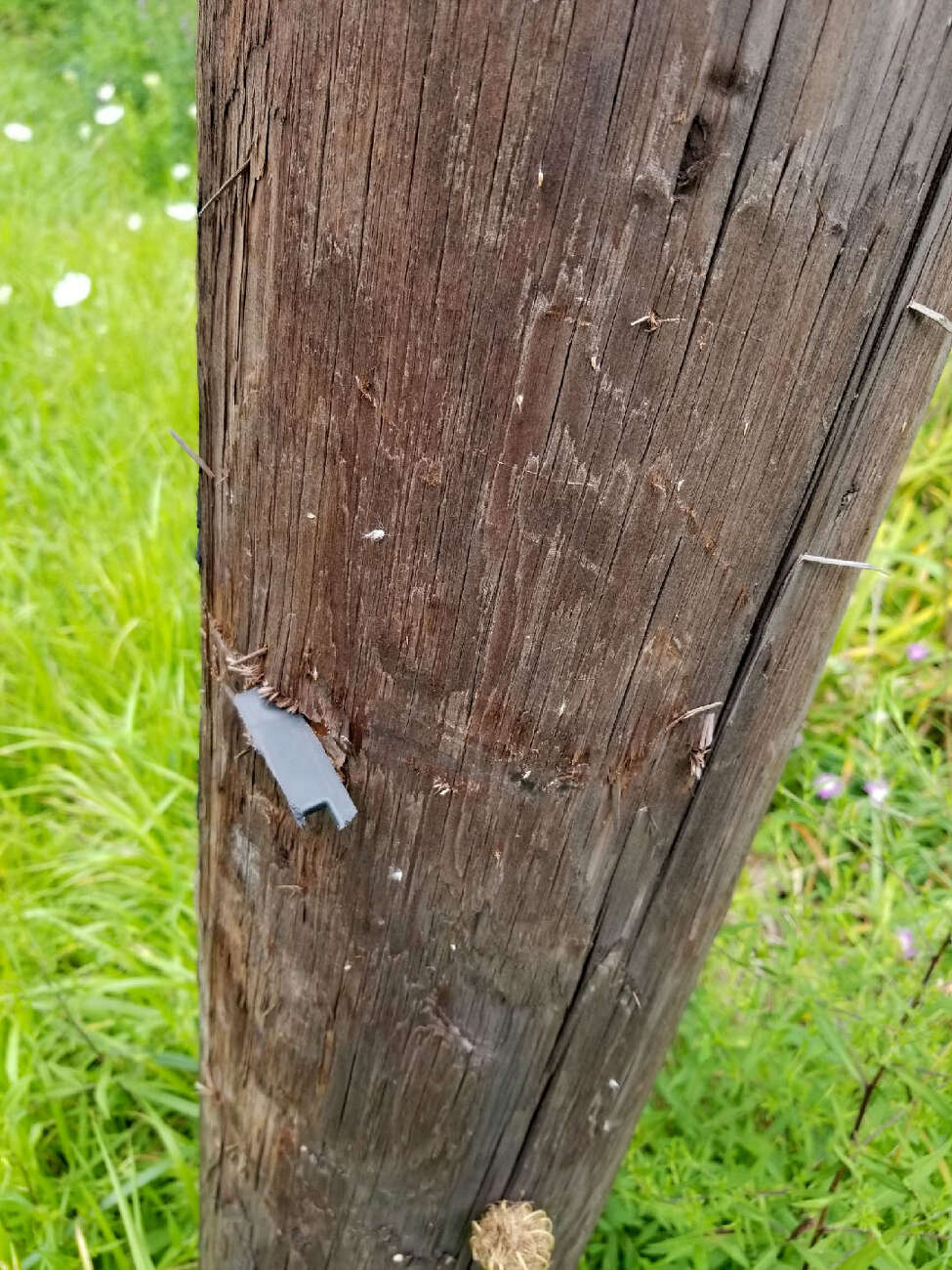 A piece of a side-view mirror from an unmarked SUV driven by State Police Sgt. Frank Stabile III remains embedded in a utility pole along Route 9G in Red Hook. Stabile told troopers he lost control of the vehicle when a deer jumped in front of him. (Provided photo)