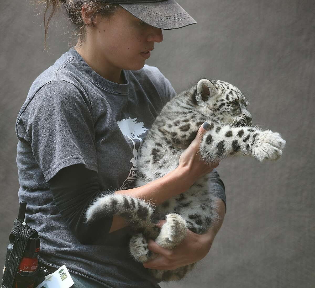 The San Francisco Zoo show one of two snow leopard cubs on Thursday, Aug. 9, 2018 in San Francisco, Calif.