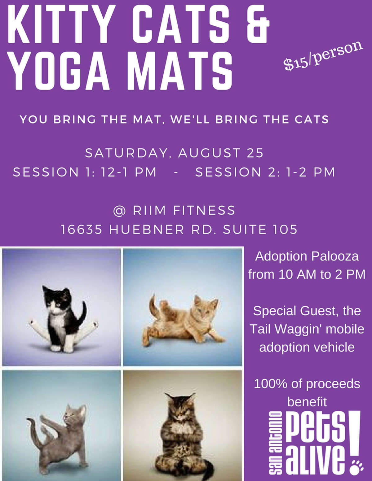 San Antonio Pets Alive will be offering up cats and kittens for adoption at their upcoming Kitty Yoga event.