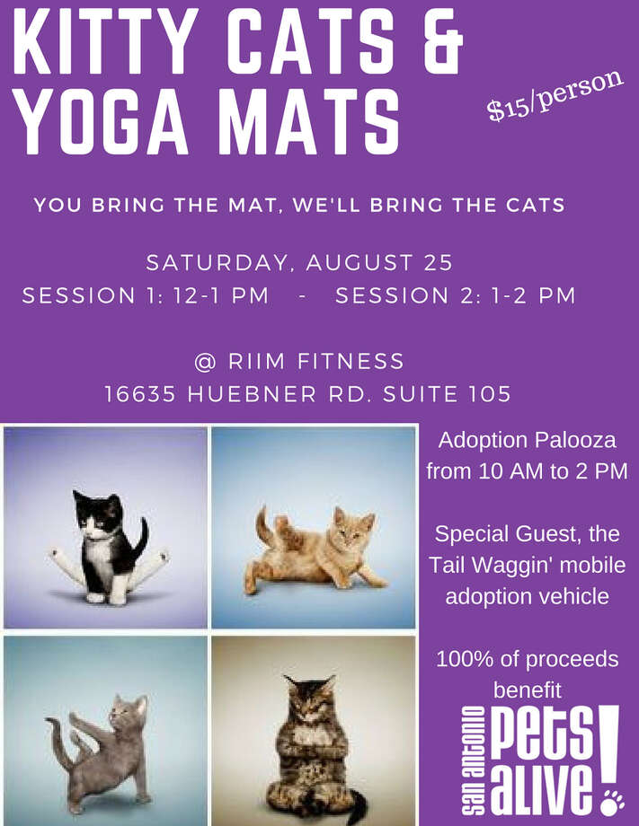 San Antonio Pets Alive will be offering up cats and kittens for adoption at their upcoming Kitty Yoga event. Photo: San Antonio Pets Alive