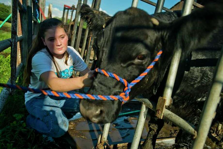 Emma Stern, 11, interacts with the cow she will be showing at the Midland County Fair 4-H on July 24 at her home in Midland. (Katy Kildee/kkildee@mdn.net)