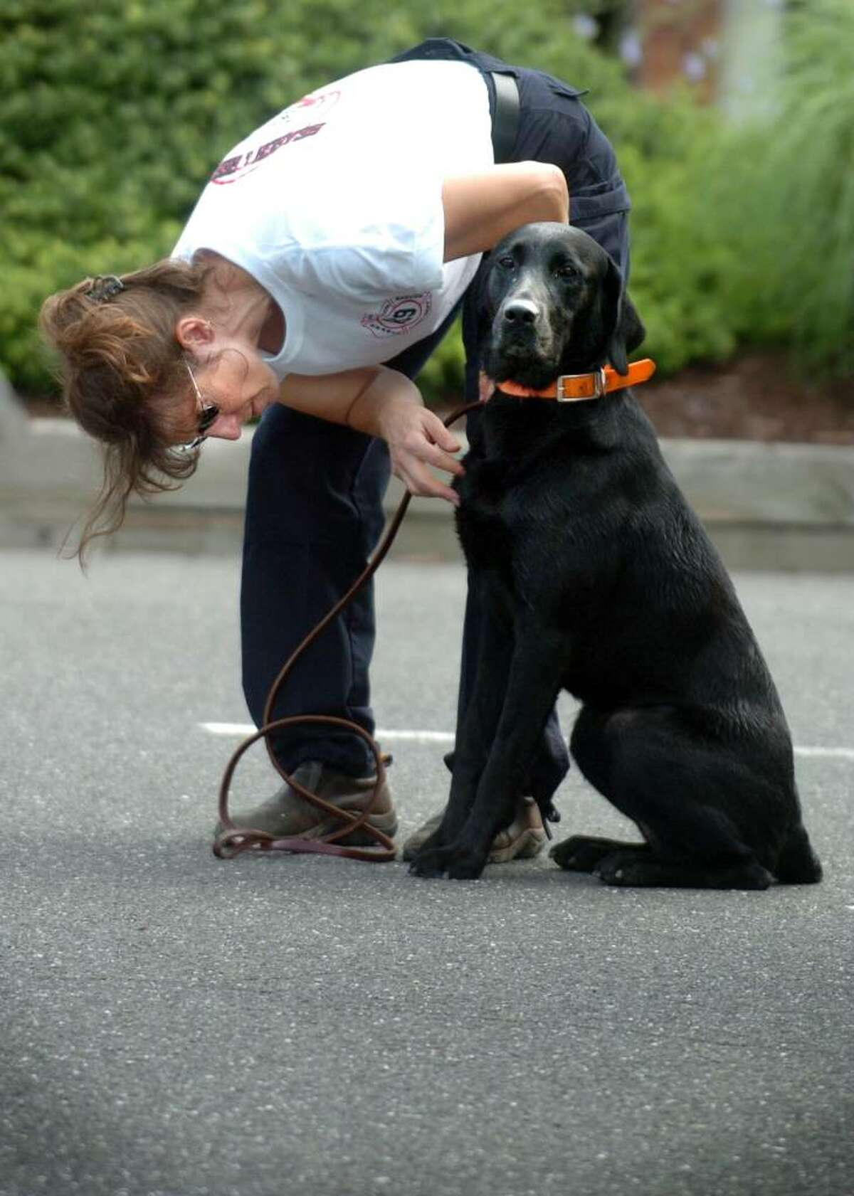 Deb Monde, a member of the Farmington Volunteer Fire Department, inspects her K9 rescue dog Murphy following a search of Seymour for evidence in the missing persons case of William Smolinski who was last seen in 2004. Monde volunteered with others from Resources in Search and Rescue, a Monroe organization, during an early morning search effort Saturday July 10, 2010. Family members and volunteers also distributed flyers at local businesses throughout the Valley to spread awareness about the continued search efforts for Smolinski.