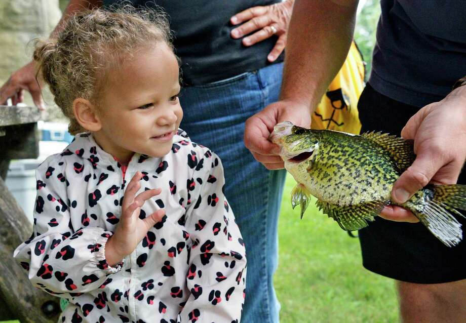 Three-year-old Holland Meerdink of Albany gets a close up look at a black crappie during the state Department of Environmental Conservation's annual fish count along the Hudson River at Peebles Island State Park Saturday August 11, 2018 in Waterford, NY.  (John Carl D'Annibale/Times Union) Photo: John Carl D'Annibale / 20044516A