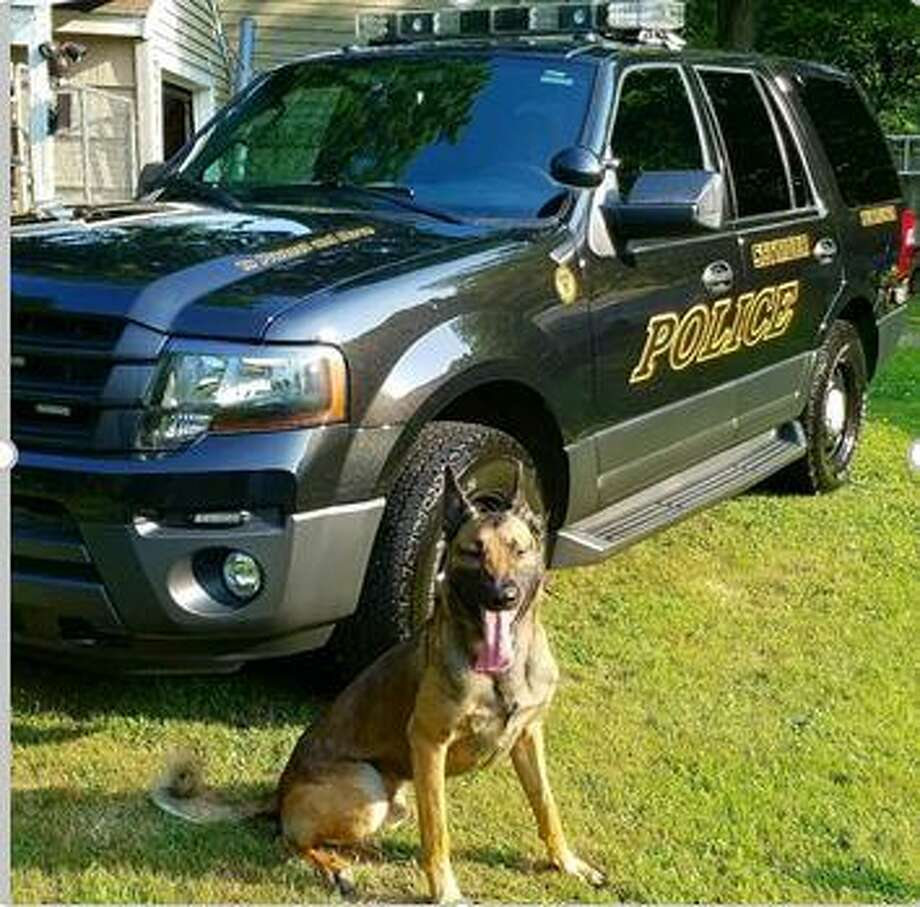 FILE PHOTO — K9 Zoar Photo: Contributed Photo / Seymour Police Department
