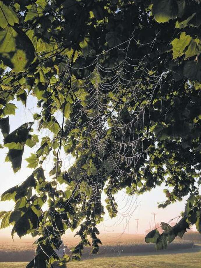 Reader Audra Chaudoin said this spider web caught her eye in the fog.