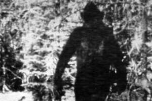 BIGFOOT--this is a still photo made from a 16mm film made by Ivan Marx showing the man like creature, also known as the abominable snowman or yeti 11/1/78--2--