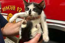 This tiny kitten, which was trapped inside an engine compartment of a parked vehicle, was rescued by Seymour firefighters on Monday, Aug. 13, 2018.