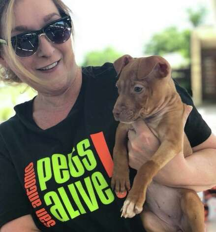 """The residents who stepped up to foster 73 dogs and cats from San Antonio Pets Alive during the crisis The organization posted on Facebook Thursday that the response was """"amazing,"""" but more fosters are still needed. Photo: San Antonio Pets Alive!"""