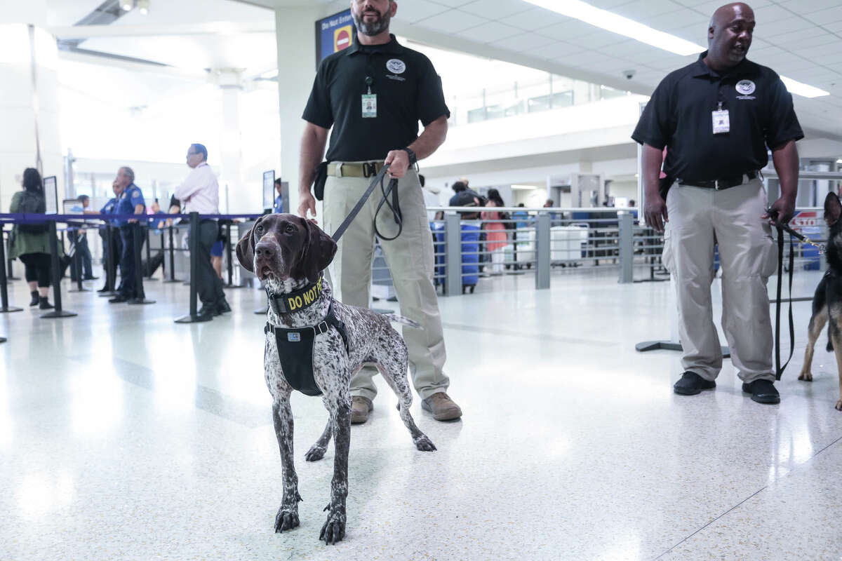 Canine teams at Oakland International Airport