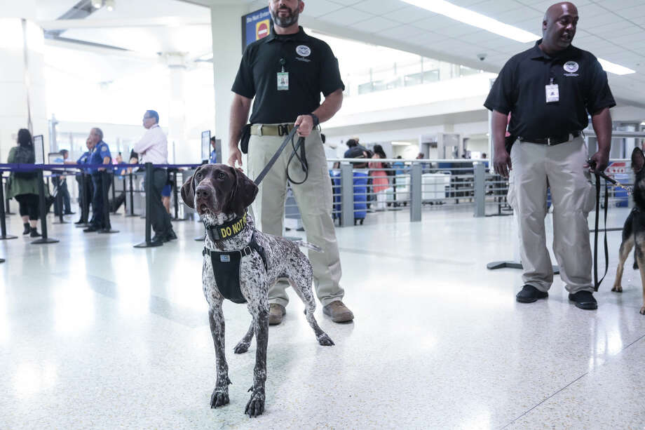 Canine teams at Oakland International Airport Photo: Oakland International Airport
