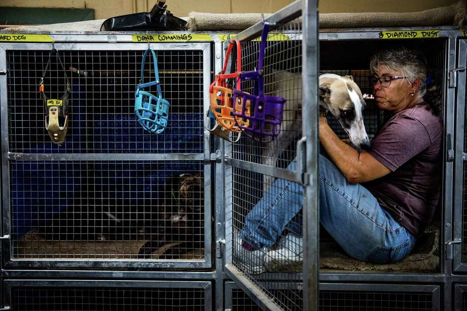 Greyhound racing trainer Kathy Lacasse pets one of her dogs at her kennel in Longwood, Fla. Photo: Photo For The Washington Post By Scott McIntyre / Scott McIntyre, For The Washington Post