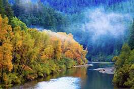 A patch of fog hovers above the Eel River along the Avenue of the Giants in Humboldt Redwoods State Park.(Photo courtesy of Julia Sumangil.)