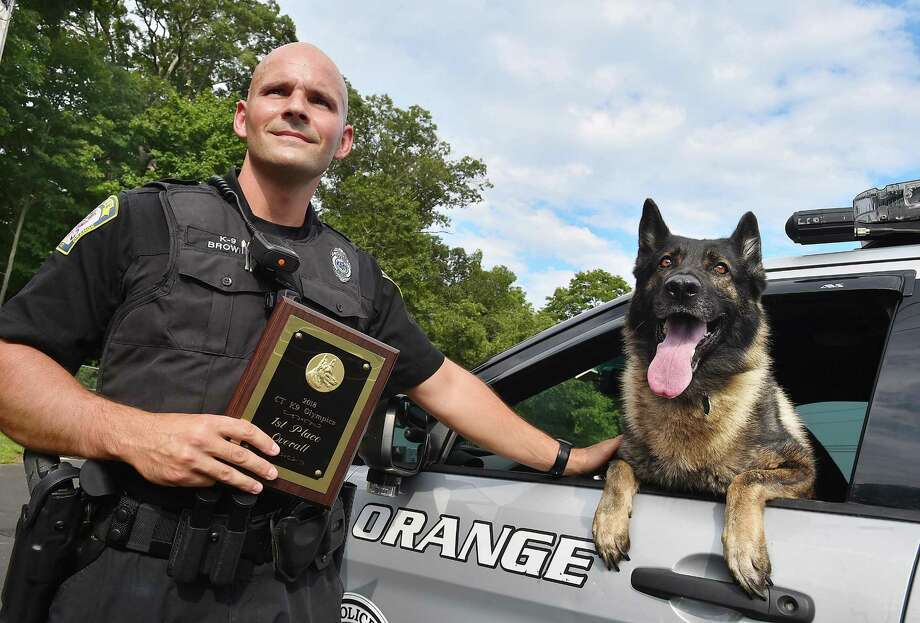 Officer Chris Brown and his a sable German Shepherd partner, Loki on Friday, at the Orange Police Department. Photo: Catherine Avalone / Hearst Connecticut Media / New Haven Register