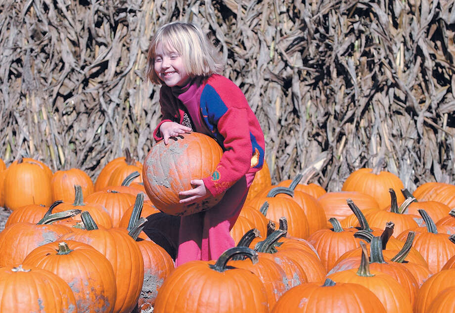 Olivia Davenport, 5, of Portland finds just the right pumpkin at Pumpkintown in Portland in a file photo.......TW photo........102204 Photo: Middletown Press File Photo