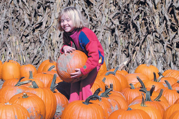 Olivia Davenport, 5, of Portland finds just the right pumpkin at Pumpkintown in Portland in a file photo.......TW photo........102204