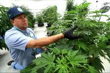 Advanced Grow Labs managing partner David Lipton in a greenhouse his company runs in West Haven, Conn. to produce marijuana for medical purposes. On Aug. 15, 2018, the New York-based liquor giant Constellation Brands announced a $4 billion investment in Canopy Growth, an Ontario, Canada-based producer of cannabis as an ingredient for varying products, with the companies having collaborated previously on the possibilities of cannabis-based beverages.