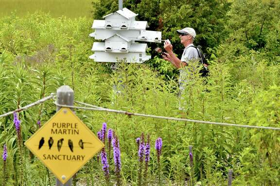 It is a good time to lower purple martin houses to discourage further nesting by English sparrows.