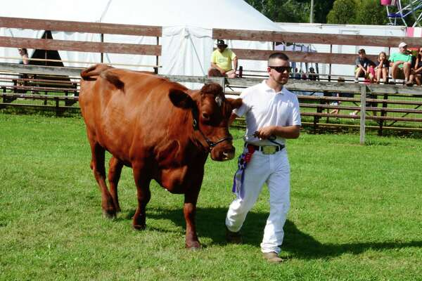 Jon O'Neill from Bethlehem leads his cow off the field during the Milking Short Horn Class competition at a local fair. There will be plenty of farm animals at the Bethelehem Fair, set for Sept. 7-9.