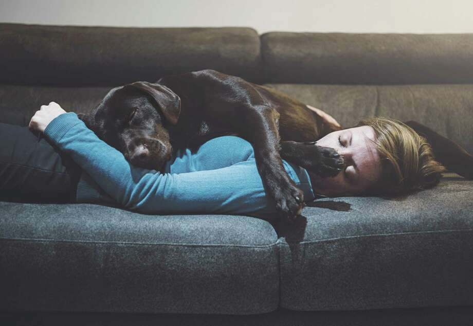 In a poll conducted by Freshpet earlier this year, more than one-third of the 2,000 pet owners surveyed said they preferred spending time with their pets over their partners, and 44 percent said they preferred to cuddle with their pets rather than their partners. Photo: Justin Paget, Contributor / Getty Images / Justin Paget Photography Ltd