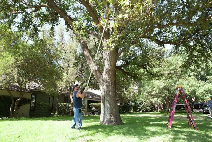 Research has found that 1) oak wilt is inactive once temperatures reach their summertime maximums by mid-July, and that 2) pruning sealant is always a good idea with oaks to lessen the chances of spreading oak wilt.