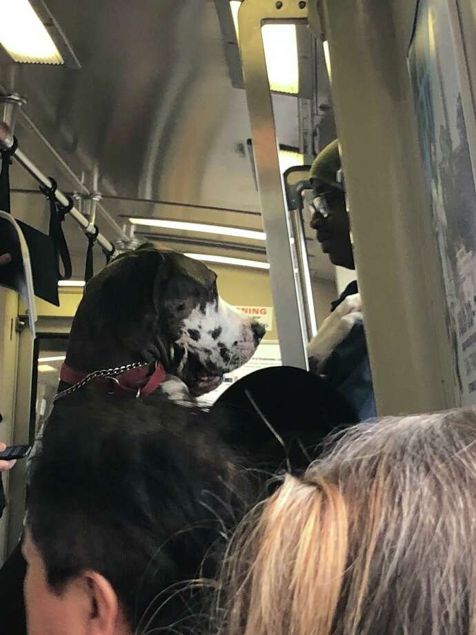 A Great Dane stood on his back legs and rode BART like a person on Wednesday. Click through the gallery to read about things you can do to make fellow commuters' rides more pleasant. Photo: Sean Herron