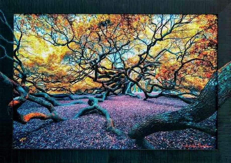 Charles Bonham's Twisted Angle Oak (color infrared on canvas) with painted frame by Denver Wilson.