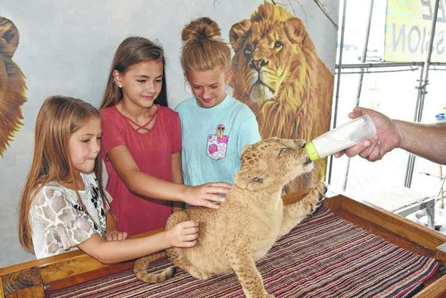 """Alexa Baptist (from left), Brynn Baptist and Lani Freeman, all of Jacksonville, pet a baby Barbary lion Wednesday at Jungle Safari, an exhibit of 19 exotic and domestic animals at Pathway Plaza at 1905 W. Morton Ave. """"The reason Pathway hosts Jungle Safari is to give individuals who might not be able to go to a zoo the opportunity to see exotic animals up close,"""" said Stephanie Baptist, director of commercial services at Pathway. Jungle Safari, which is free to see, is open from 10 a.m. to 9 p.m. today through Saturday and 11 a.m. to 5 p.m. Sunday. Photo:       Greg Olson 