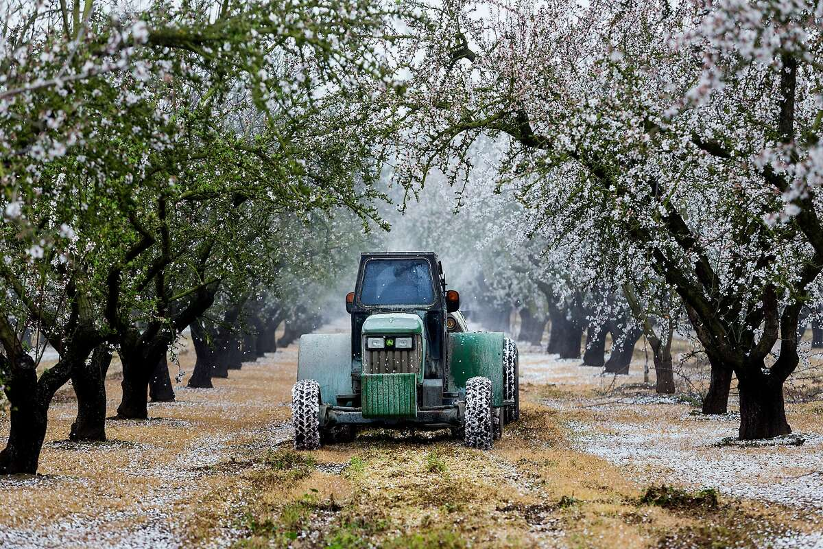 A farm worker drives a truck that sprays and fans out herbicide as it makes its rounds on the almond tree farm on Jake Wenger's family nut farming operation on Feb. 21, 2015 in Modesto, Calif. California almond growers exported more than $518 million worth of their product to China in 2016. Almonds are one of the crops facing additional tariffs of 15% on their export to China in a looming trade war with the U.S. (Marcus Yam/Los Angeles Times/TNS)