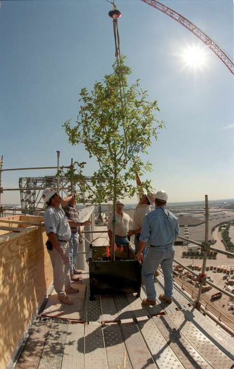 October 2001: The Houston Texans celebrated the formal topping out of Reliant Stadium with tours for local dignitaries. Workers positioned an oak tree to mark the topping out of the structure. Photo: Steve Ueckert/Houston Chronicle