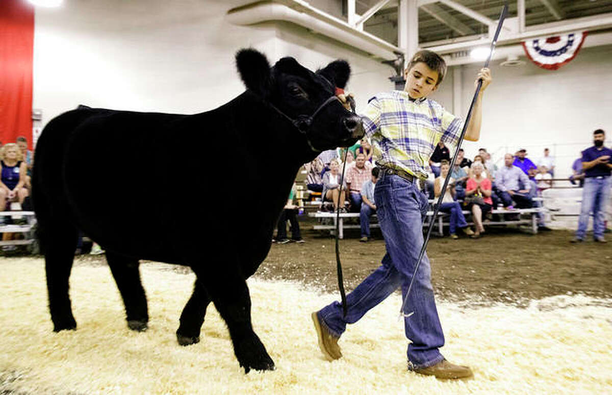 FILE - Adam Miller leads Taco, his grand champion steer, down the aisle at the Governor's Sale of Champions at the Illinois State Fair. Ted Schurter   State Journal-Register (AP)