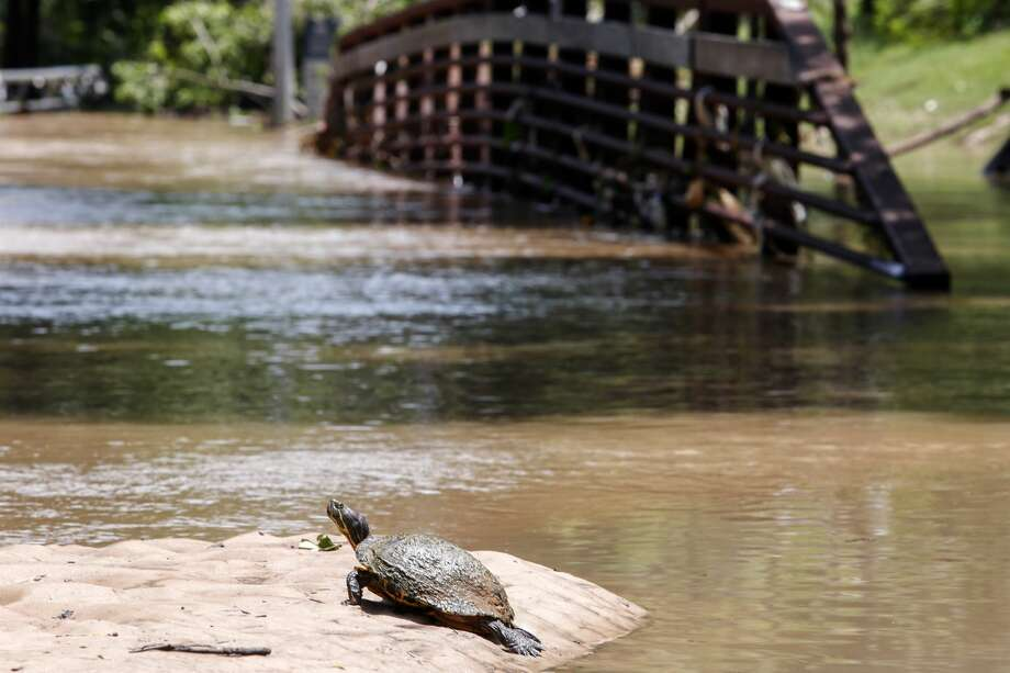 PHOTOS: Texas' wildlife scene Texas wildlife experts are efforting to prohibit the commercial harvesting of four of Texas' prominent wild turtle species because their numbers are dwindling.   >>>See which counties across Texas have the most registered exotic animals...  Photo: Eric Kayne/Getty Images