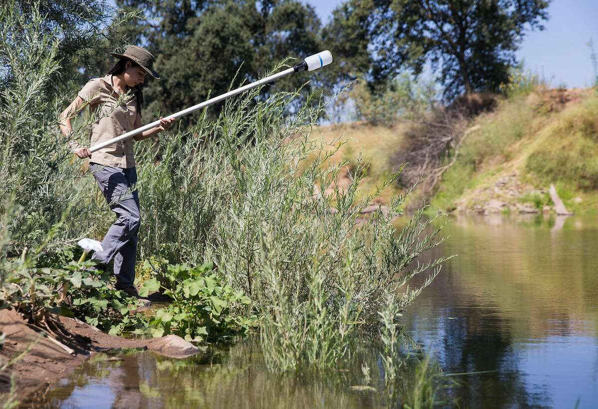 Victoria Martinez, an intern with the Tuolumne River Trust, assists in testing water levels near Ceres River Bluff Regional Park along the Tuolumne River in Ceres, Calif. Friday, Aug. 17, 2018.