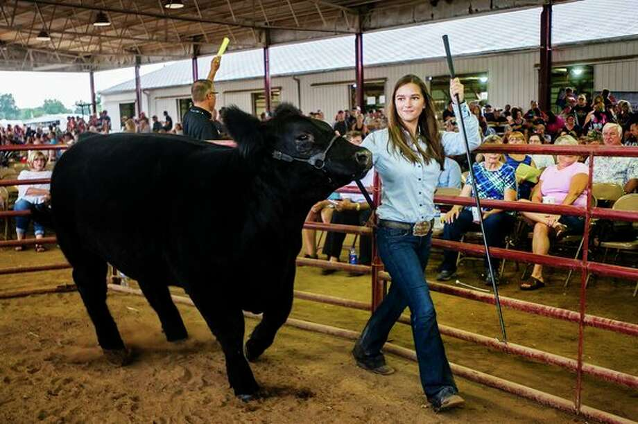 Danielle Fleming shows off her Reserve Grand Championsteer during the Midland County Fair large animal auction on Thursday, Aug. 16, 2018 at the Midland County Fairgrounds. (Katy Kildee/kkildee@mdn.net)