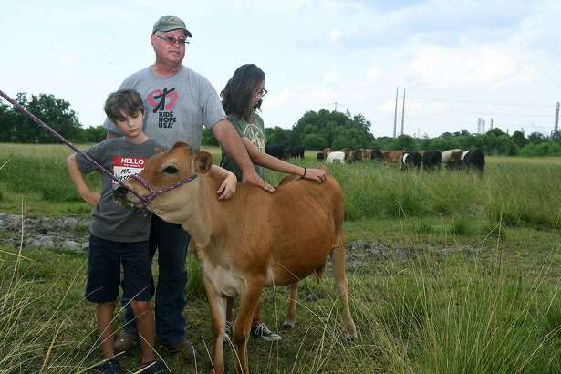 """Ray Law, center, of Law Ranch Cattle Company, with his children William, 11, left, a Crosby Middle School 6th grader, and Katherine, 13, left, a Crosby Middle School 8th grader, tends to """"Dairy Queen"""", his two-month old Jersey cow, on their ranch in the Lake Houston area on July 30, 2018."""