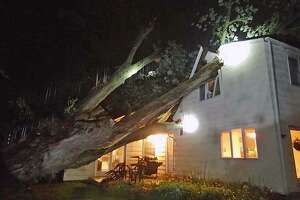Fire officials said a large tree fell into a home on Compo Road North in Westport, Conn., and did structural damage on the first and second floors. The sole occupant of the home was assessed by firefighters and found to be uninjured, officials said.