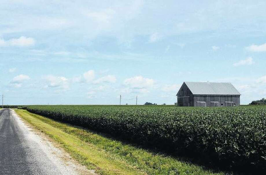 Green crops frame a quiet road in eastern Morgan County.