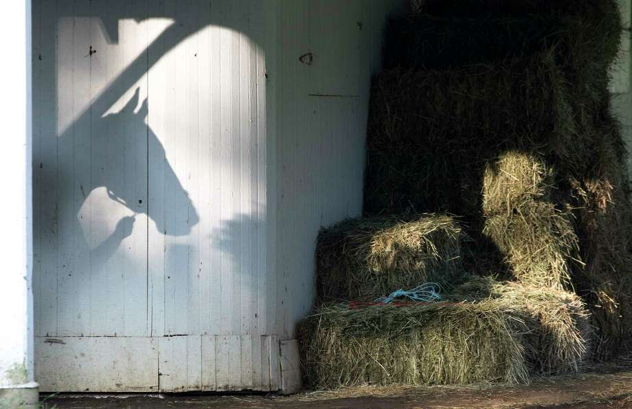 A moment of sun breaking through the trees causes a shadow of a horse captured in the barn area of trainer David Cannizzo on Clare Court Monday  Aug. 20, 2018 at the Saratoga Race Course in Saratoga Springs, N.Y. Click through the slideshow to see more of Skip Dickstein's most notable photographs from 2018.