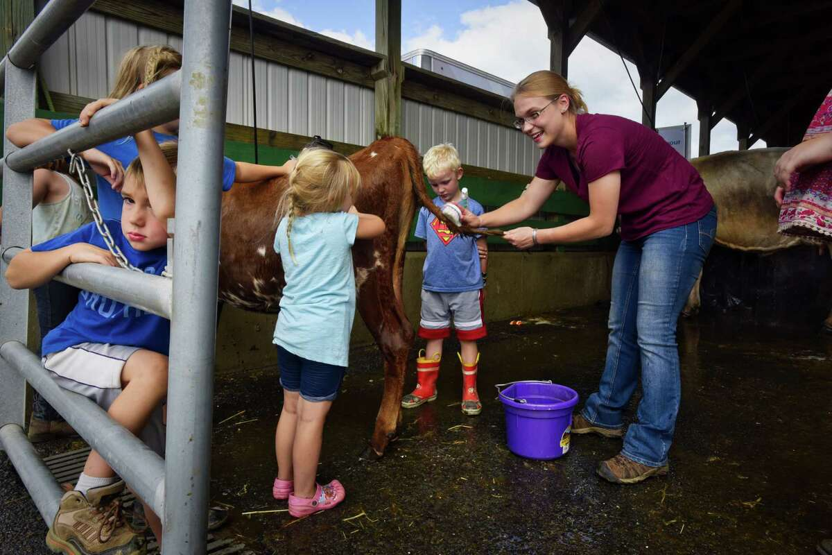 Julie Randels cleans the tail of Swirl, a Ayrshire spring calf with the help of family and friends at the Washington County Fair on Monday, Aug. 20, 2018, in Greenwich, N.Y. Luke Snyder, 6, second from right, will show Swirl on Friday. The fair runs through Sunday, Aug. 26th. (Paul Buckowski/Times Union)