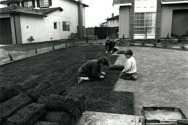 "From ""Suburbia"": ""I bought the lawn in six-foot rolls. It's easy to handle. I prepare the ground and my wife and son helped roll out the grass. In one day you have a front yard."""