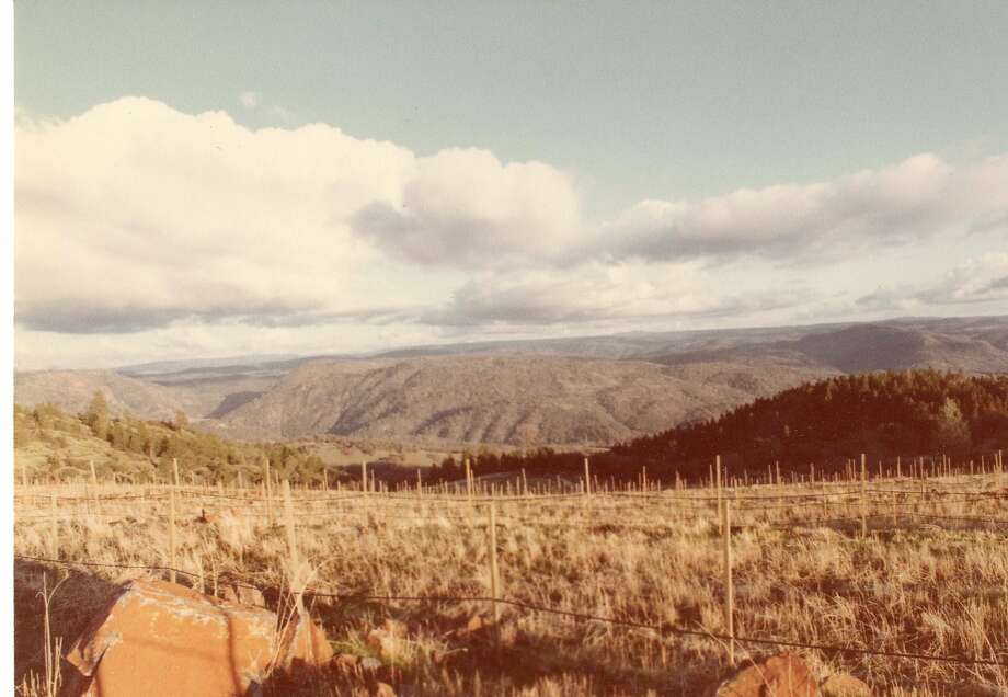 The Renaissance vineyard was still under development in February 1981. Photo: Courtesy Of Fellowship Of Friends