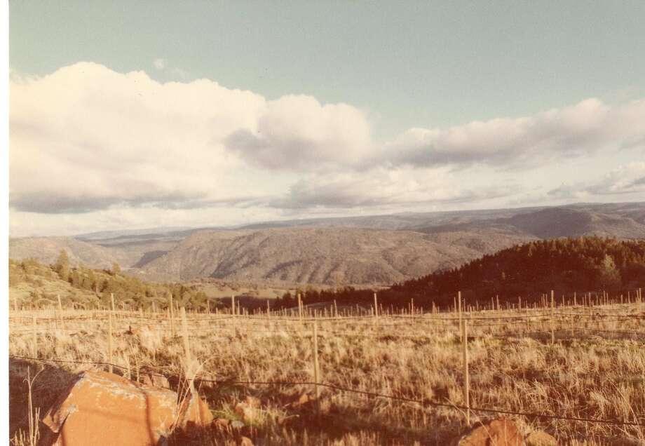 The Renaissance vineyard was still under development in February 1981. Photo: Courtesy Of Fellowship Of Friends