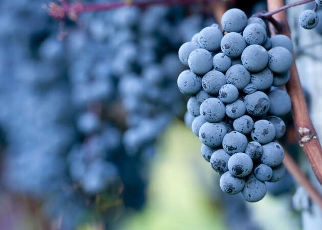 Anderson Valley's finest Pinot Noir producers