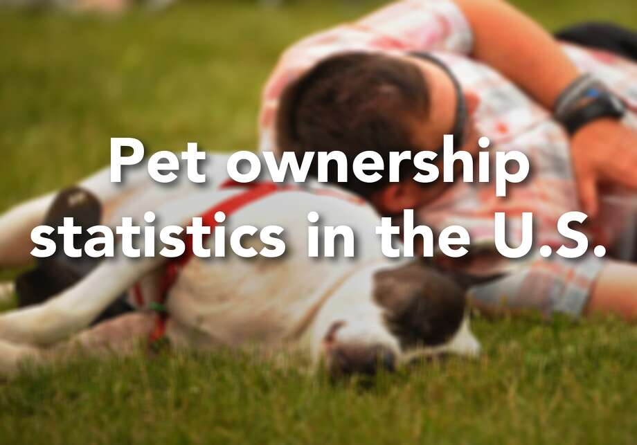 Here are the latest stats on pet ownership in the U.S. Photo: Brian A. Pounds/Hearst Connecticut Media