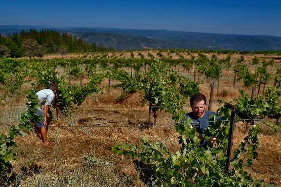(L-R) Aaron Mockrish, and Dani Rozman, look over Syrah vines where they lease at Renaissance Winery in Oregon House, Calif., on Thursday, July 5, 2018. The winery, dating back to the early 70s, is owned and run by the Fellowship of Friends, a group formed around alternative religious and philosophical beliefs.