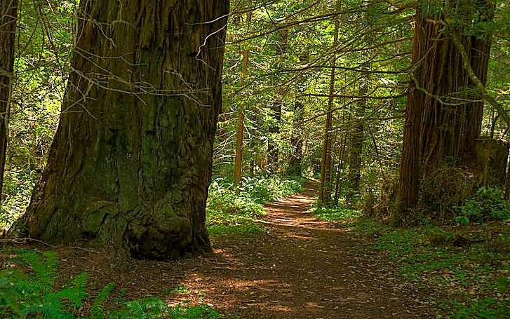 The Heritage Grove Trail spans from Heritage Grove to Sam McDonald County Park, located south of La Honda